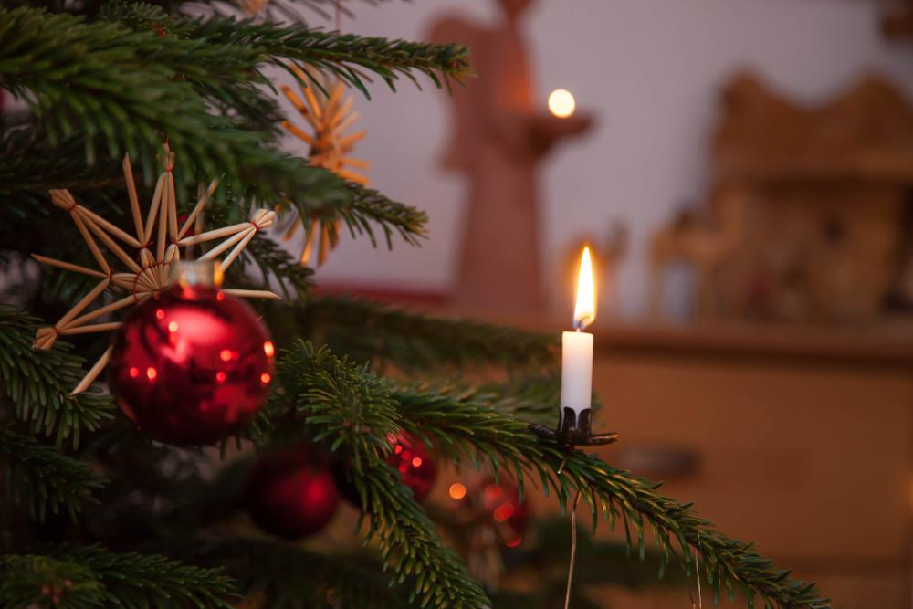 Last-Minute Weihnachtsbäume