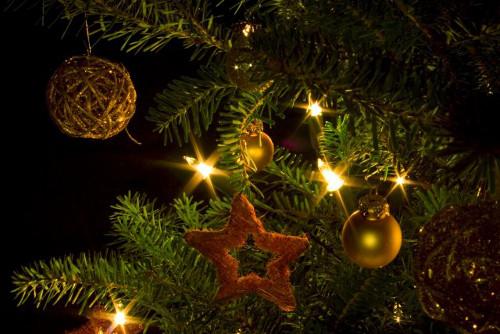 5 Alternativen zum klassischen Weihnachtsbaum