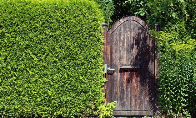 Der optimale Sichtschutz für die Terrasse
