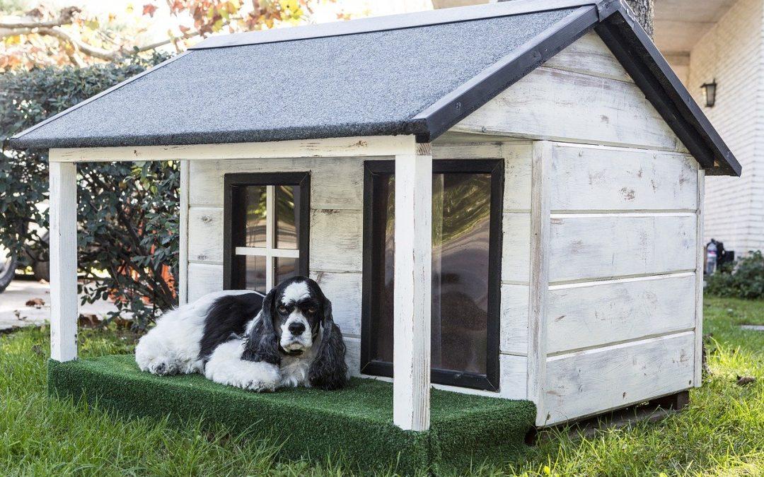 Hundehütte selbst bauen