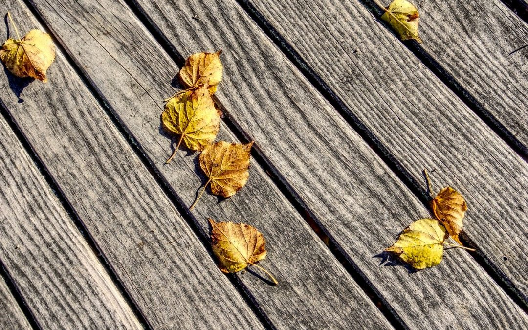 Terrassendielen aus Holz oder WPC?
